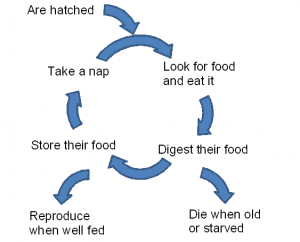 All birds follow this basic life cycle
