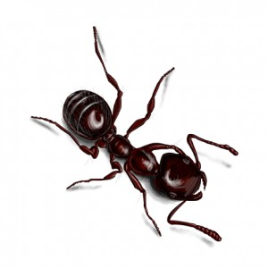 black-ant-illustration_432x432